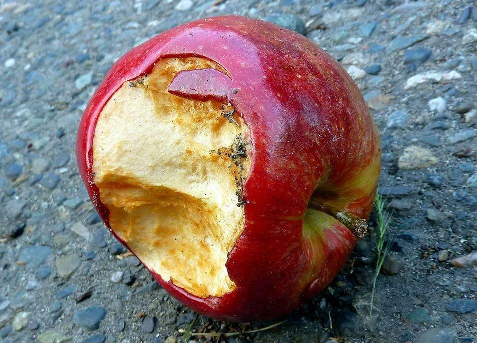 The rotten apple spoils his companion