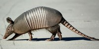 There's nothing in the middle of the road but yellow stripes and dead armadillos
